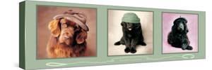 Smart Chapeau by Rachael Hale