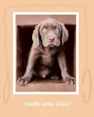Youth Gone Wild by Rachael Hale