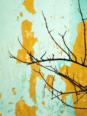 Detail of Tree Branch Against Wall with Peeling Paint by Rachel Lewis
