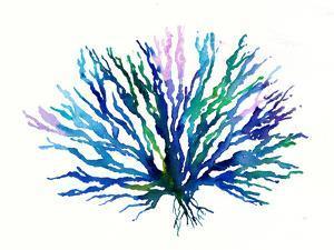 Coral 1 by Rachel McNaughton