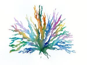 Coral 2 by Rachel McNaughton