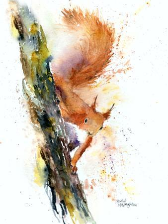Squirrel 1 by Rachel McNaughton