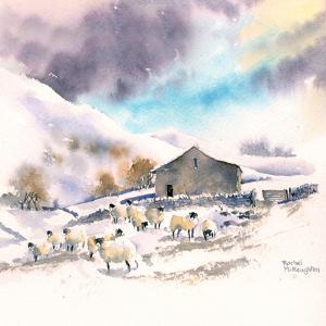 Winter Sheep And Barn by Rachel McNaughton