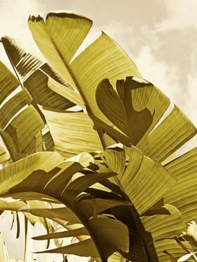 Palm Fronds I by Rachel Perry