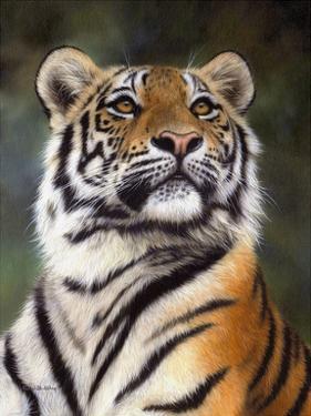 Amur Tiger Looking Up by Rachel Stribbling