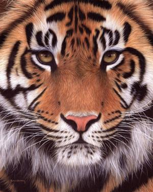 Sumatran Tiger by Rachel Stribbling