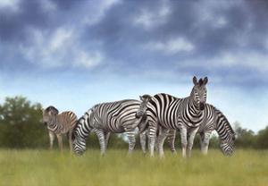 Zebras by Rachel Stribbling