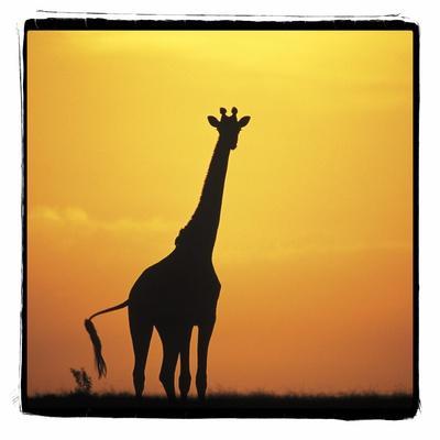 https://imgc.allpostersimages.com/img/posters/radiant-africa-1_u-L-Q10PRV90.jpg?p=0