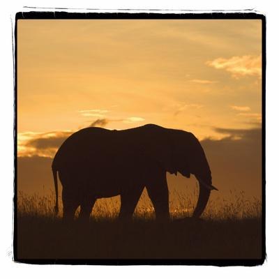 https://imgc.allpostersimages.com/img/posters/radiant-africa-2_u-L-Q10PRVM0.jpg?p=0