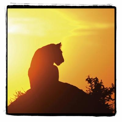 https://imgc.allpostersimages.com/img/posters/radiant-africa-4_u-L-Q10PRS60.jpg?p=0