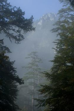 Black Pines, Distant Mountain in Light Mist, Crna Poda Nr, Tara Canyon, Durmitor Np, Montenegro by Radisics