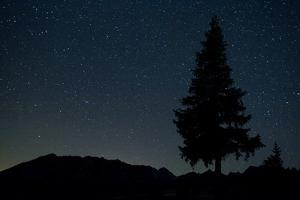 Pine Tree at Night on Stuoc Peak, Durmitor Np, Montenegro, October 2008 by Radisics