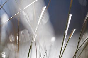 Snow on Grass, Durmitor Np, Montenegro, October 2008 by Radisics