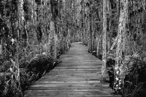 Boardwalk through Everglades Florida, USA by Radius Images