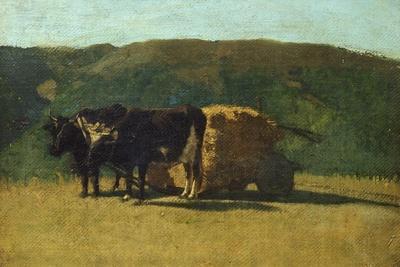 Black Oxen Pulling Wagon