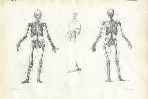 Human Being, 1863-79 by Raimundo Petraroja