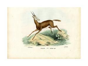 Oryx, 1863-79 by Raimundo Petraroja