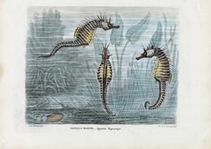 Seahorses, 1863-79 by Raimundo Petraroja