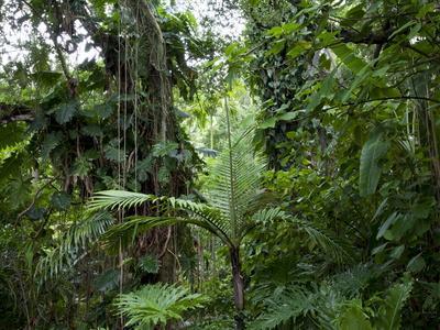 https://imgc.allpostersimages.com/img/posters/rain-forest-fairchild-tropical-gardens-miami-florida-usa_u-L-PFO12D0.jpg?p=0