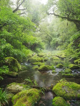 https://imgc.allpostersimages.com/img/posters/rain-forest-omanawa-gorge-bay-of-plenty-north-island-new-zealand_u-L-Q11YZRQ0.jpg?p=0