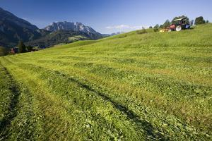 Austria, Styria, Grimming, Ennstal, Mountain-Region, Agriculture, Field Work by Rainer Mirau