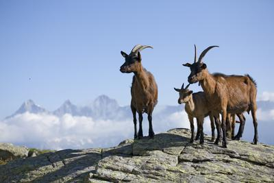 Austria, Styria, Schladminger Tauern, Rocks, Mountain-Goats, Nature