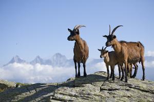Austria, Styria, Schladminger Tauern, Rocks, Mountain-Goats, Nature by Rainer Mirau