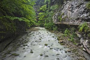 Austria, Vorarlberg, Dornbirn (Village), Rappenlochschlucht (Ravine) (Gulch) by Rainer Mirau