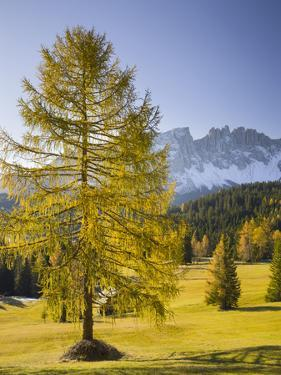 Autumnal Alp in Front of the Mountain Latemar, Kšlbleggiesen, Near Niger Pass, Larch, South Tyrol by Rainer Mirau