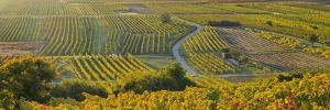 Autumnal Vines, Vineyards, Baden Near Vienna, Southern Part of Viennese Basin, Lower Austria by Rainer Mirau