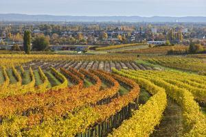 Autumnal Vineyards in the Termenregion, Baden Near Vienna, Austria by Rainer Mirau