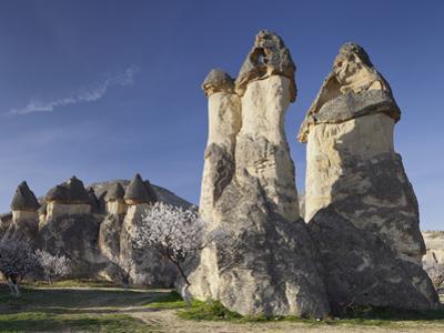 Blossoming Tree and Fairy Chimneys Near Pasabagi, Tuff Stone, Gšreme, Cappadocia, Anatolia, Turkey by Rainer Mirau