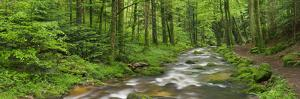 Coarse Brook, Gerold Villagesau, Black Forest, Baden-Baden, Baden-Wurttemberg, Germany by Rainer Mirau