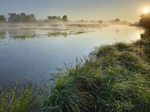 Danube Meadows, Austria by Rainer Mirau