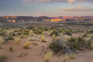 Desert Near Wahweap, Glen Canyon National Recreation Area, Utah, Usa by Rainer Mirau