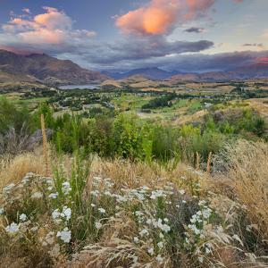 Feehly Hill Scenic Reserve, Arrowtown, Otago, South Island, New Zealand by Rainer Mirau