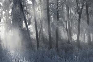 Hoarfrost in the Viennese Wood, Badener Lindkogel, Austria by Rainer Mirau