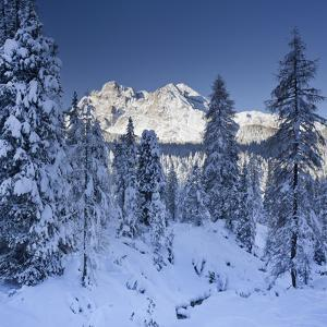 Italy, South Tyrol, Alto Adige, Monte Cristallo, Snow, Spruces by Rainer Mirau