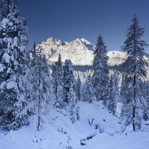 Italy, South Tyrol, Alto Adige, Monte Cristallo, Snow, Spruces by Rainer Mirau