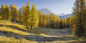 Monte Cristallo, Larches, Cortina D'Ampezzo, Veneto, the Dolomites, Italy by Rainer Mirau