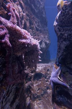 Octopus, Den BlΠPlanet, Blue Plante Aquarium, Copenhagen, Denmark by Rainer Mirau