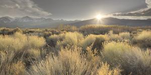 Owens River Valley, Sierra Nevada, California, Usa by Rainer Mirau