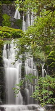 Purakanui Falls, Catlins, Otago, South Island, New Zealand by Rainer Mirau