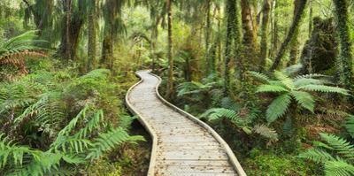 Rain Forest, Way, Footbridge, Ship Creek, West Coast, South Island, New Zealand by Rainer Mirau