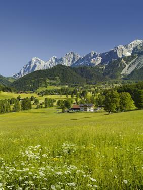 Ramsau, Dachstein, Summer Meadow, Styria, Austria by Rainer Mirau