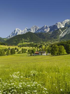 Ramsau, Dachstein, Summer Meadow, Styria, Austria by Rainer Mirau