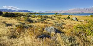 Shore of the Lake Tekapo, Canterbury, South Island, New Zealand by Rainer Mirau
