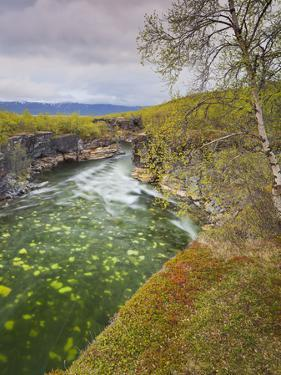 Sweden, Lapland, Abisko National Park, Gorge by Rainer Mirau