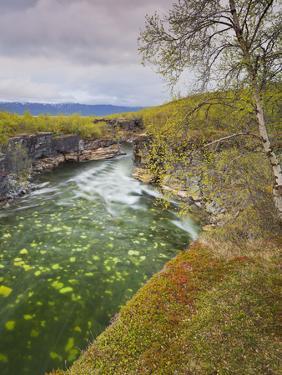 Sweden, Lapland, Abisko National Park, Gorge by Rainer Mirau