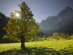 Sycamore Maple, Spritzkarspitze, Gro§er Ahornboden, Engalm, Karwendel, Tyrol, Austria by Rainer Mirau